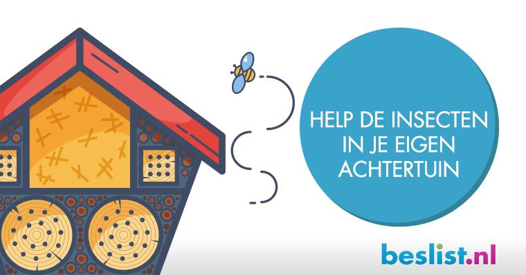 Infographic Insecten: Help de insecten in je eigen achtertuin